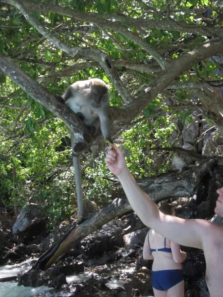 Krmení-opic-na-výletě