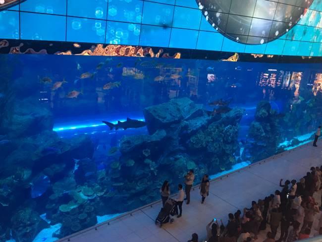 Akvárium-v-Dubai-Mall