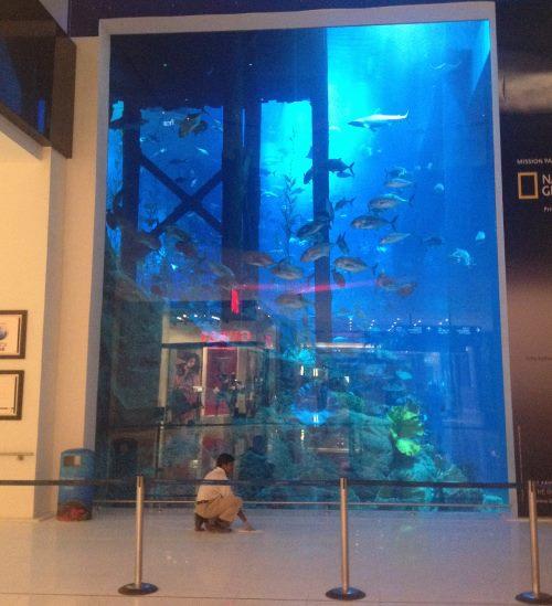 Krásné-akvárium-v-Dubajském-ochodním-centru-při-nakupování