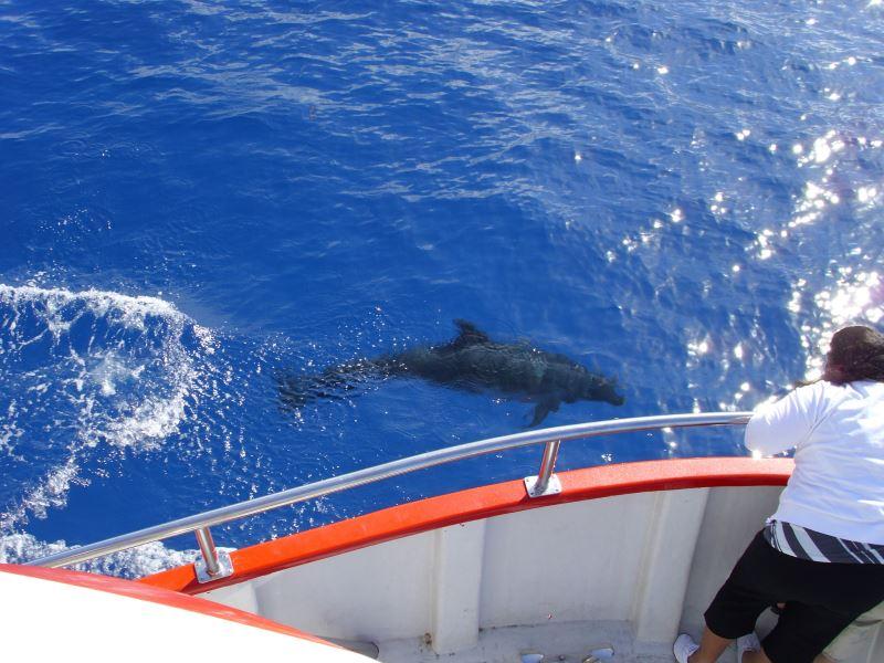 Divocí-delfíni-v-oceánu-u-pobřeží-Kanárů