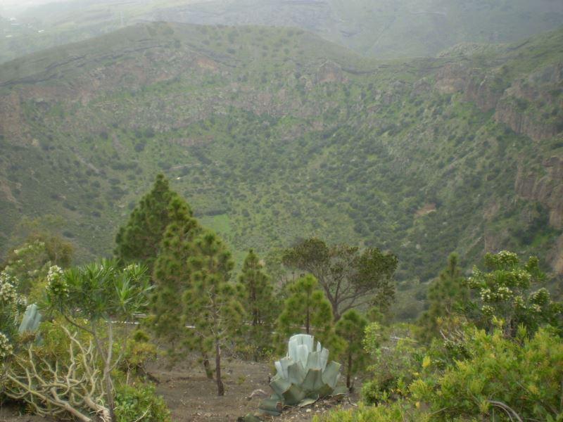 Pohled-do-kráteru-Bandama